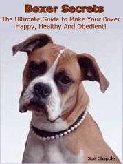 Boxer Dog Secrets